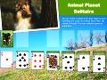 Игра Animal Planet Solitaire  онлайн - игри онлайн